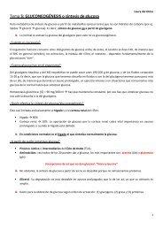 GLUCONEOGÉNESIS o síntesis de glucosa - VeoApuntes.com