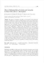 Effects of Ruthenium Red on Excitation and Contraction ... - Gpb.sav.sk