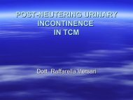 Post-Neutering Urinary Incontinence in TCM - SIAV
