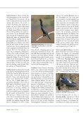 SIGHTINGS - American Birding Association - Page 2
