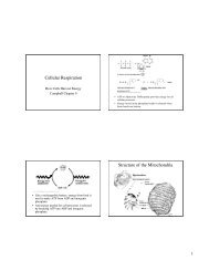 Cellular Respiration Structure of the Mitochondria