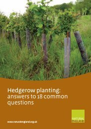 NE HEDGEROW PLANTING (5639)