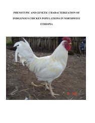 phenotypic and genetic characterization of indigenous chicken