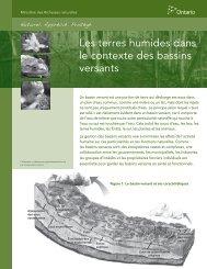 Les terres humides dans le contexte des bassins versants - Ontario.ca