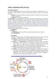 TEMA 8. REPRODUCCIÓN CELULAR - Biología El Valle