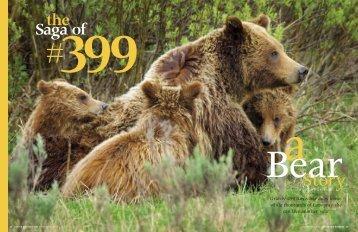 The Saga of Bear #399 - Northern Rocky Mountain Science Center ...