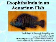 Exophthalmia in an Aquarium Fish - University of Georgia College of ...