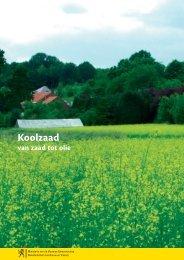 Koolzaad, van zaad tot olie - Vlaanderen