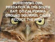 BURROWING OWL PREDATION IN THE SOUTH BAY; DO ...