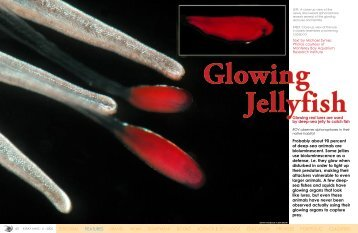 Glowing Jellyfish - X-Ray Magazine