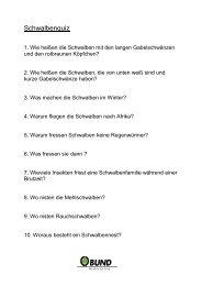 Schwalbenquiz - BUND Konstanz