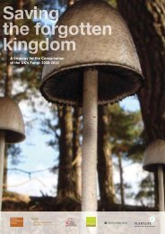 A Strategy for the Conservation of the UK's Fungi: 2008 ... - Plantlife