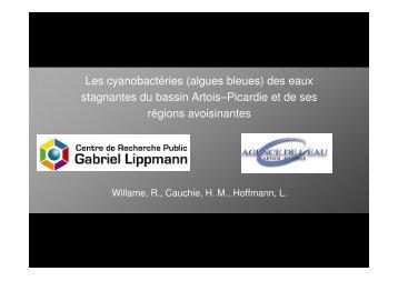Les cyanobactéries (algues bleues) - Agence de l'eau Artois Picardie