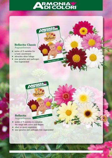 Page 1 Bellavita Argyranthemum Bellavita Classic Argyranthemum ...