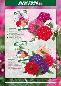 Page 1 Bellavita Argyranthemum Bellavita Classic Argyranthemum ... - Page 5