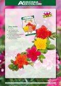 Page 1 Bellavita Argyranthemum Bellavita Classic Argyranthemum ... - Page 7