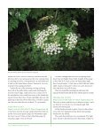 June - Sycamore Island Club - Page 6