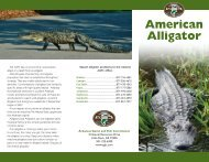 American Alligator - Arkansas Game and Fish Commission