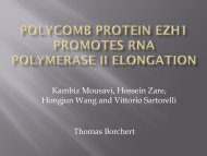 Polycomb Protein Ezh1 Promotes RNA Polymerase II Elongation
