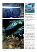 Under Busselton Jetty - Department of Environment and Conservation - Page 4