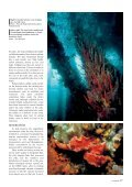 Under Busselton Jetty - Department of Environment and Conservation - Page 7