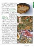 Feuersteine – für Sammler ein Augenschmaus, für Landwirte und ... - Seite 2