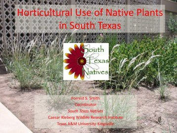 Horticultural Use of Native Plants in South Texas - Caesar Kleberg ...