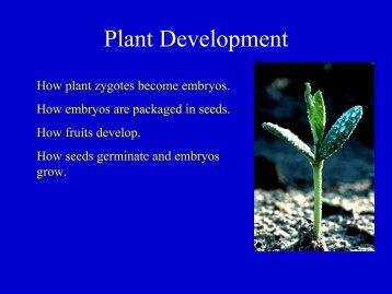 Plant Development.pdf