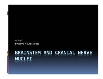 BRAINSTEM AND CRANIAL NERVE NUCLEI
