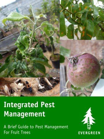 Integrated Pest Management - Evergreen