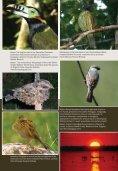 advert cotinga 29 - FAUNA Paraguay - Page 5