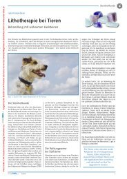 Hundefutter Tierheilpraxis Mössner