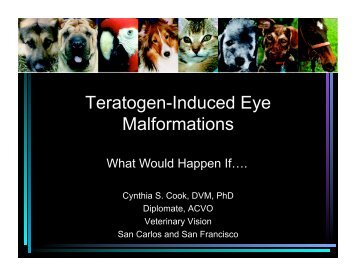 Teratogen-Induced Eye Malformations