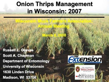 Onion thrips management in Wisconsin