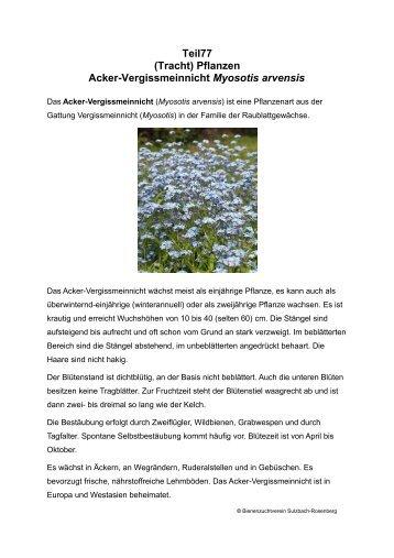Teil77 (Tracht) Pflanzen Acker-Vergissmeinnicht Myosotis arvensis