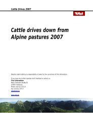 Cattle drives down from Alpine pastures 2007