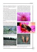 Metodología - Ministerio de Agricultura, Alimentación y Medio ... - Page 7