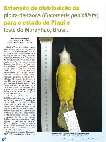 Eucometis penicillata - Atualidades Ornitológicas