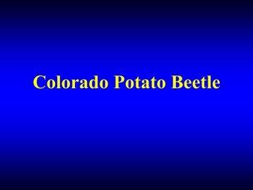 Life History of Colorado Potato Beetle