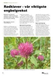 Rødkløver - vår viktigste engbelgvekst - Fagbladet Økologisk Landbruk