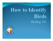 Birding 101 (updated March 2013)