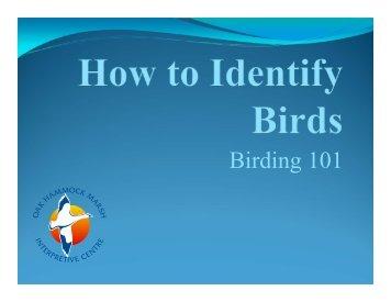 Birding 101 (updated March 2013)