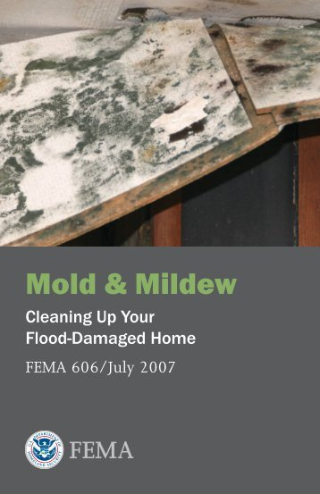 Mold & Mildew: Cleaning Up Your Flood-Damaged Home