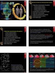 • Ablauf der mechanischen Herzaktion • Anpassung an erhöhte ...