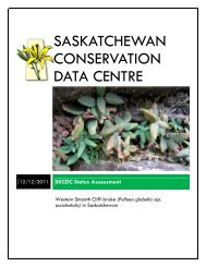 Pellaea glabella - Saskatchewan Conservation Data Centre
