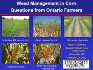 Weed Management in RR Corn: Questions from Ontario Growers