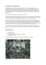 Das Geheimnis von Washington DC - Siebenstern Imkerei