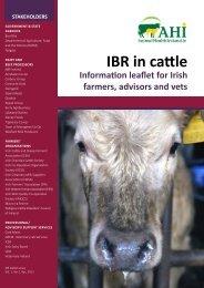 IBR in cattle - Animal Health Ireland