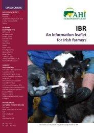 IBR - an information leaflet for Irish Farmers - Animal Health Ireland