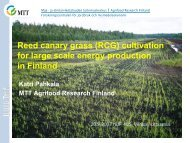 (RCG) cultivation for large scale energy production in Finland